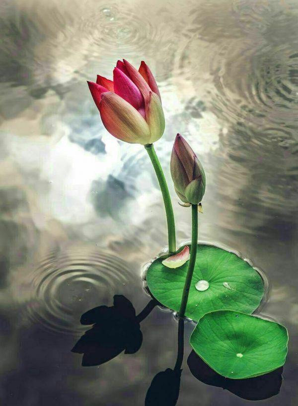 ریشه دار که باشی تا آسمان هم قد میکشی.... ریشه های تو باور های توست...